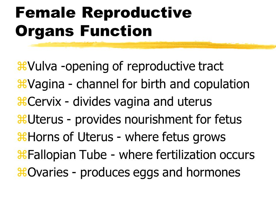 Reproductive Systems Major Organs Of The Reproductive System