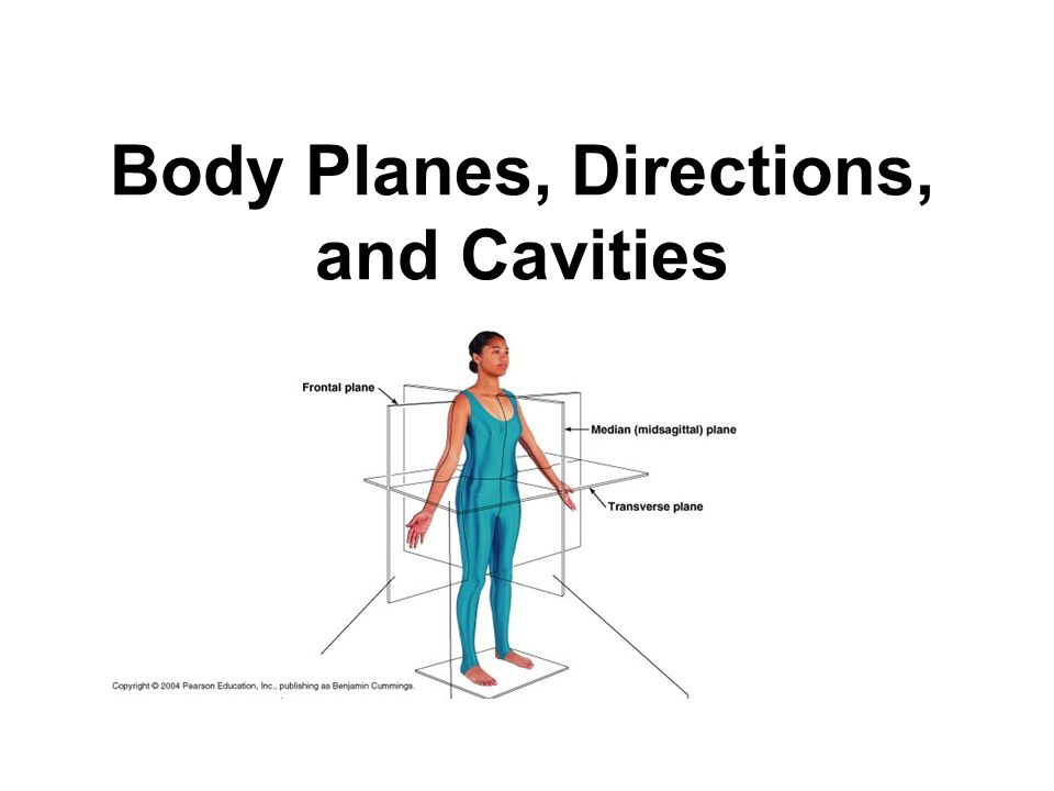 Body Planes, Directions, and Cavities. Basic Terms to Know… Anatomy ...