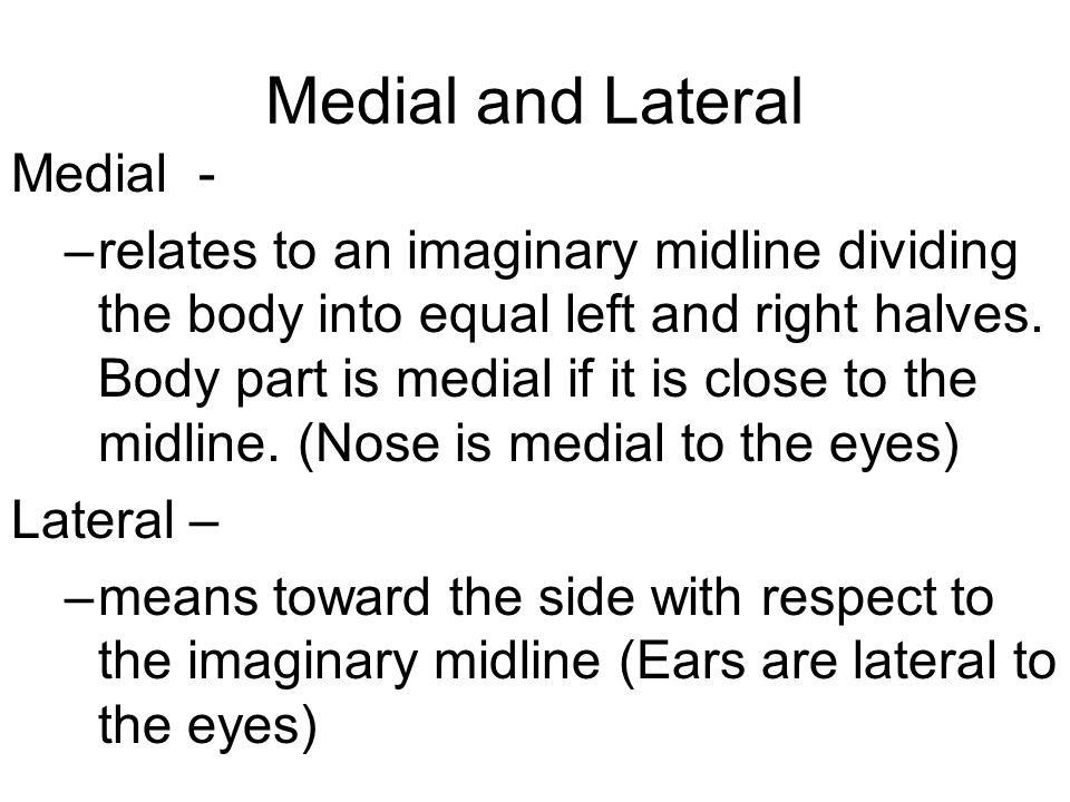 Medial and Lateral Medial - –relates to an imaginary midline dividing the body into equal left and right halves.