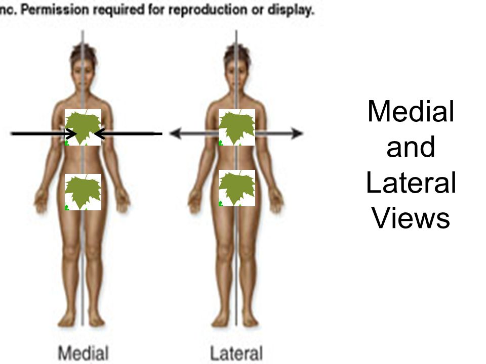 Medial and Lateral Views