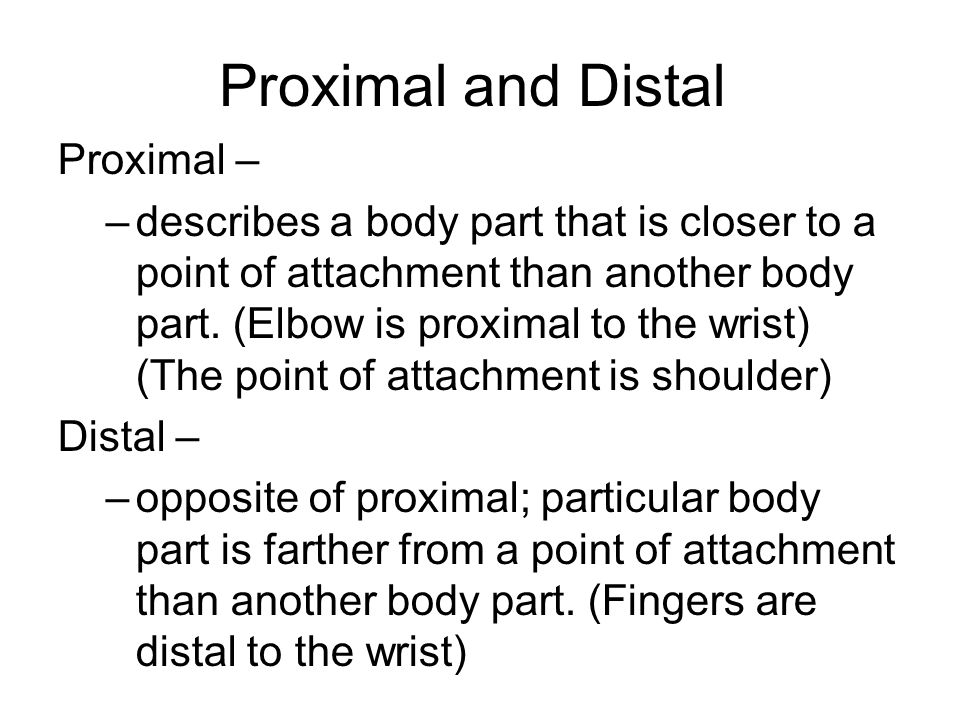 Proximal and Distal Proximal – –describes a body part that is closer to a point of attachment than another body part.