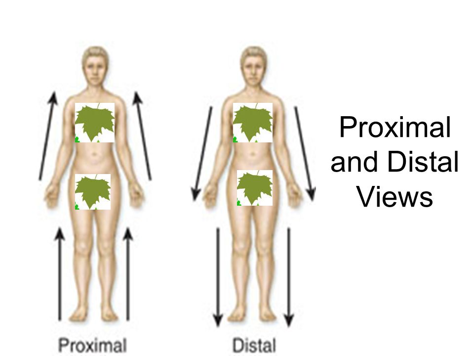 Proximal and Distal Views