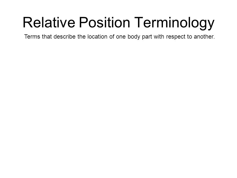 Relative Position Terminology Terms that describe the location of one body part with respect to another.