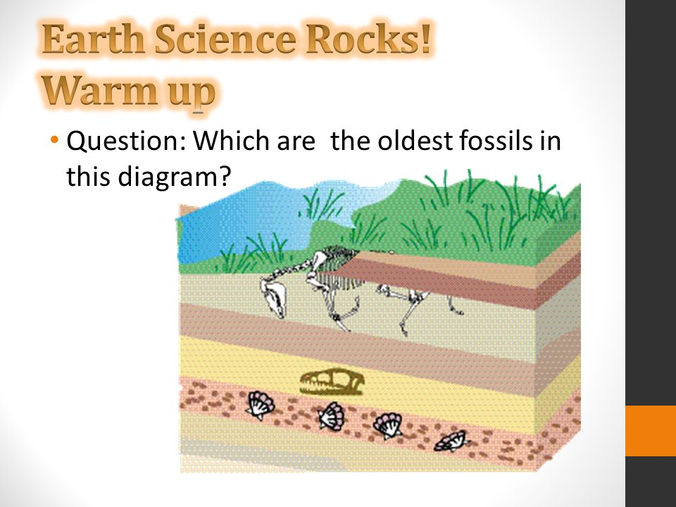 Question Which Are The Oldest Fossils In This Diagram Ppt Download