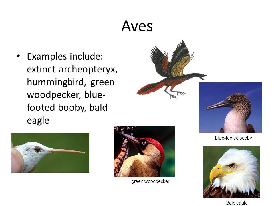 chordates nonvertebrate chordates fish amphibians reptiles and