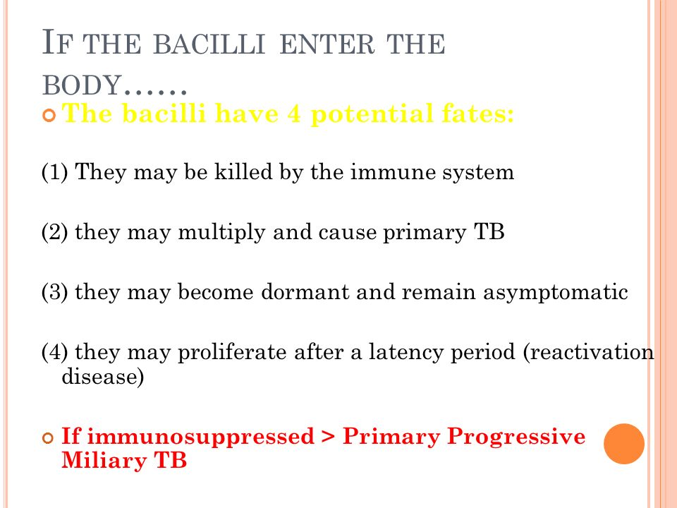 I F THE BACILLI ENTER THE BODY …… The bacilli have 4 potential fates: (1) They may be killed by the immune system (2) they may multiply and cause primary TB (3) they may become dormant and remain asymptomatic (4) they may proliferate after a latency period (reactivation disease) If immunosuppressed > Primary Progressive Miliary TB