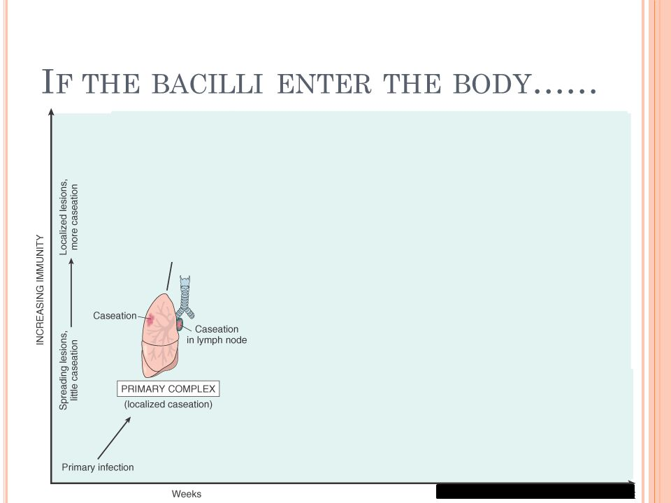 I F THE BACILLI ENTER THE BODY ……