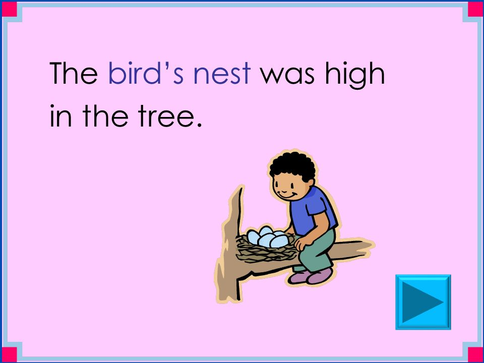 The bird's nest was high in the tree.