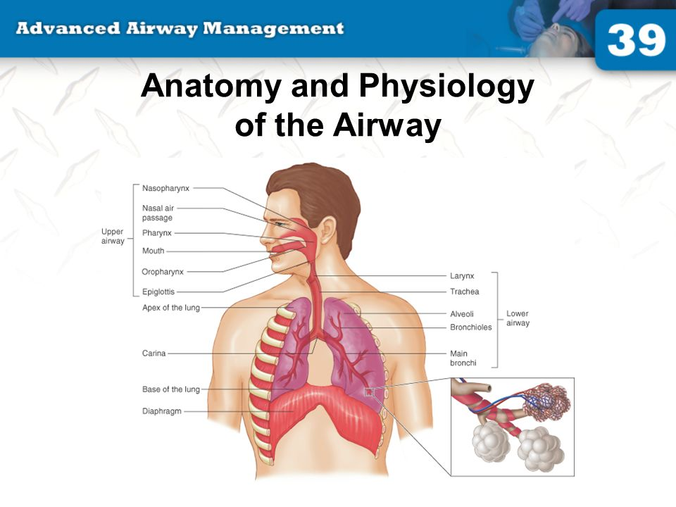 39: Advanced Airway Management Identify and describe the airway ...