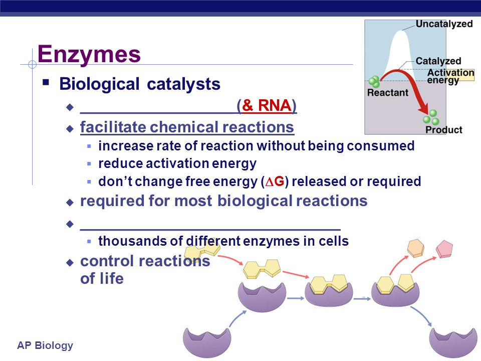 AP Biology Catalysts  So what's a cell got to do to reduce activation energy.
