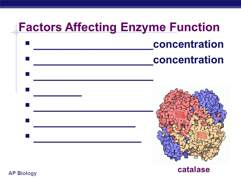 AP Biology Factors that Affect Enzymes