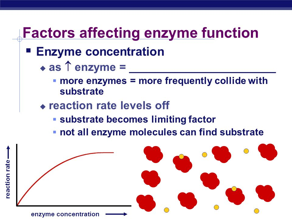 AP Biology Enzyme concentration enzyme concentration reaction rate What's happening here !