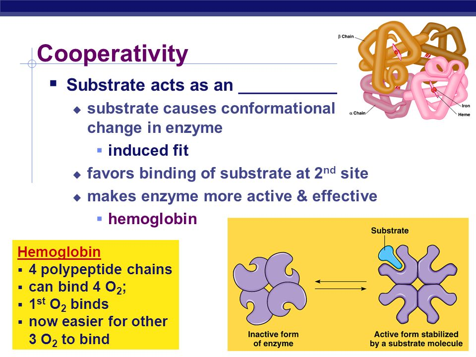 AP Biology Feedback inhibition  Example  synthesis of amino acid, ___________ from amino acid, __________________  isoleucine becomes the _______________ ___________of the first step in the pathway  as product accumulates it collides with enzyme more often than substrate does threonine isoleucin e
