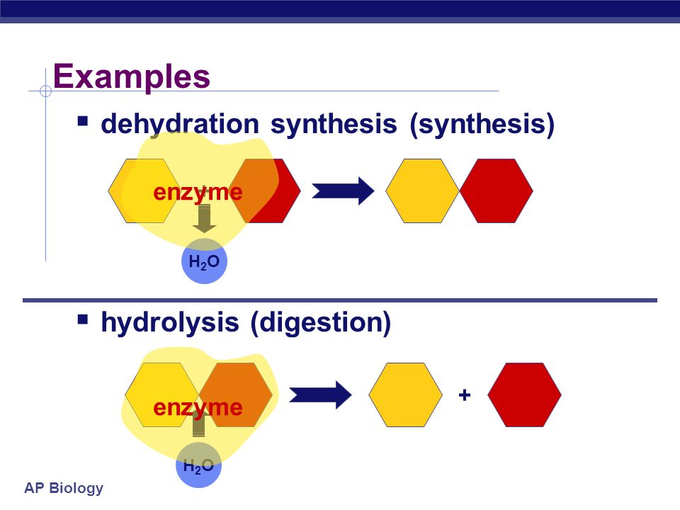 AP Biology Metabolism  Chemical reactions of life  ___________________between molecules  dehydration synthesis  synthesis  __________________________________  ___________________between molecules  hydrolysis  digestion  _____________________ That's why they're called anabolic steroids!