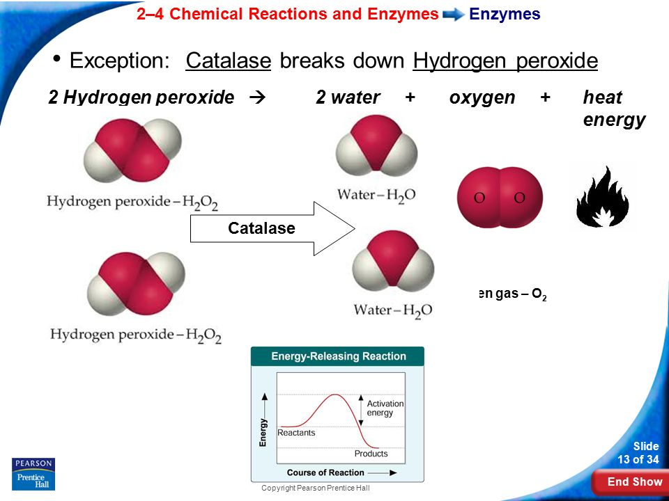 an analysis of chemical reactions in enzymes The huge variety of chemical species, types of reaction, and the accompanying potential energy surfaces involved means that the timescale over which chemical reactions occur covers many orders of magnitude, from very slow reactions, such as iron rusting, to extremely fast reactions.
