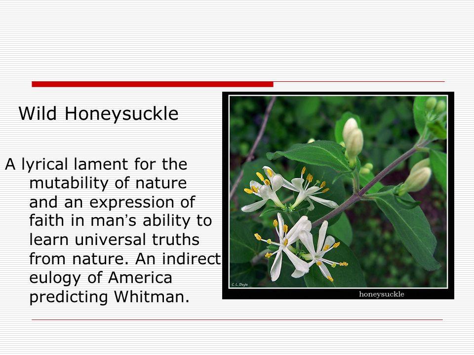philip freneau the wild honeysuckle summary