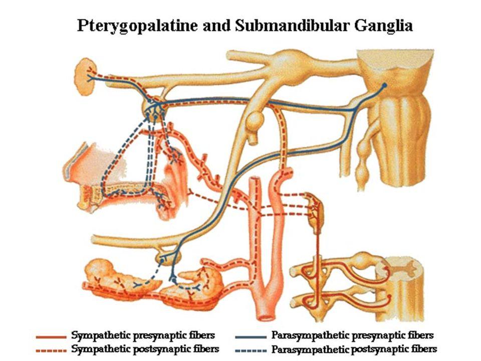 Autonomic nervovous system - ppt video online download