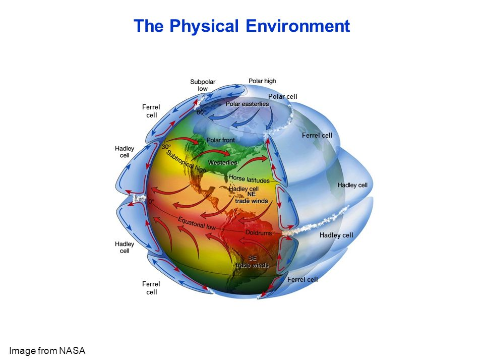 Ferrel cell Ferrel cell Ferrel cell Hadley cell Ferrel cell Polar cell The Physical Environment Image from NASA