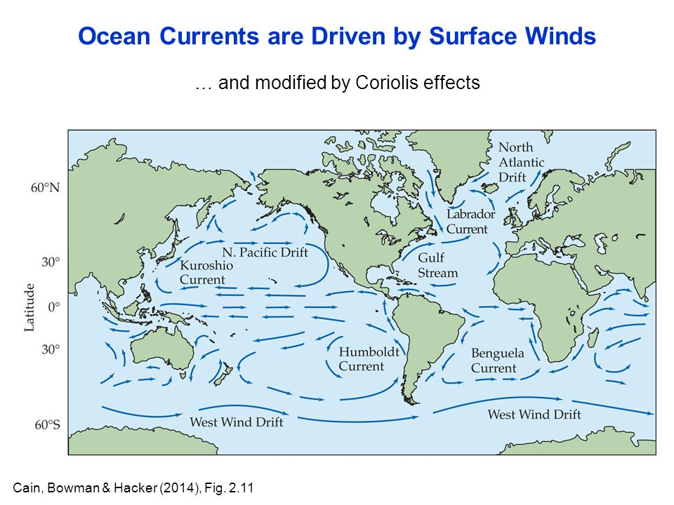 … and modified by Coriolis effects Ocean Currents are Driven by Surface Winds Cain, Bowman & Hacker (2014), Fig.