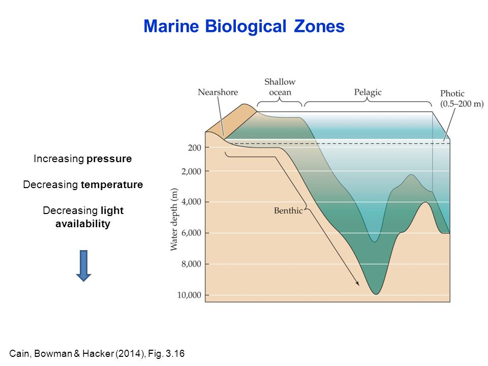 Marine Biological Zones Cain, Bowman & Hacker (2014), Fig.