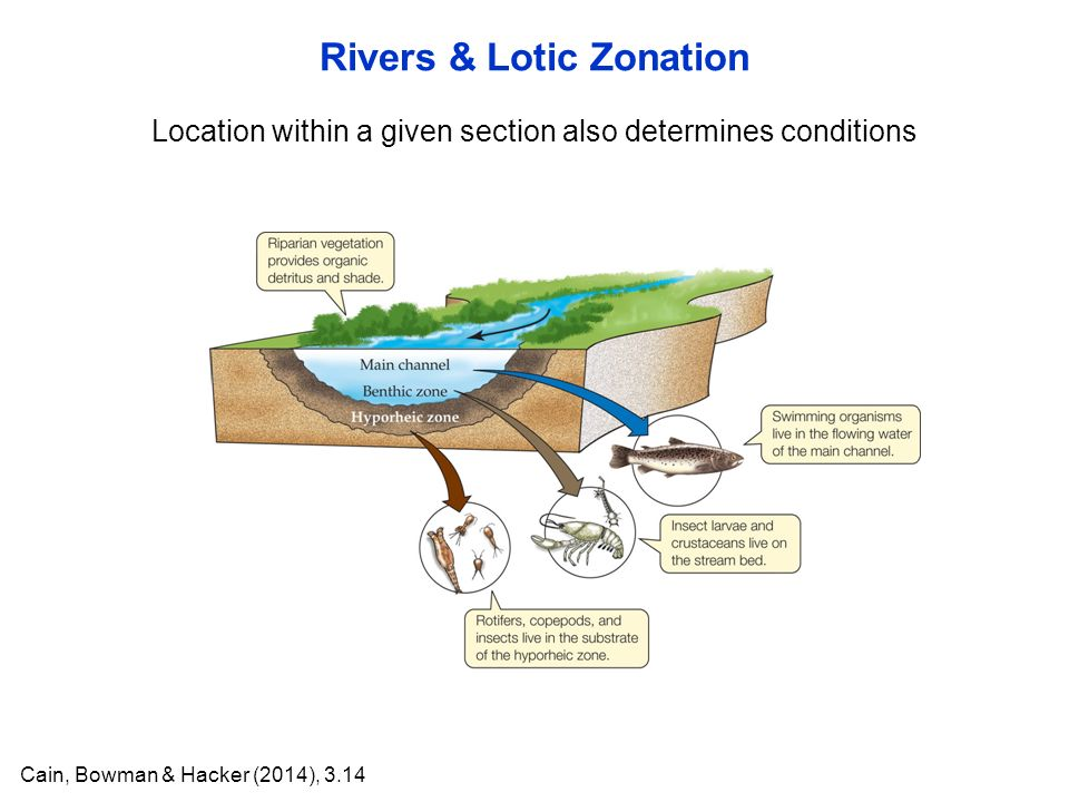 Rivers & Lotic Zonation Cain, Bowman & Hacker (2014), 3.14 Location within a given section also determines conditions
