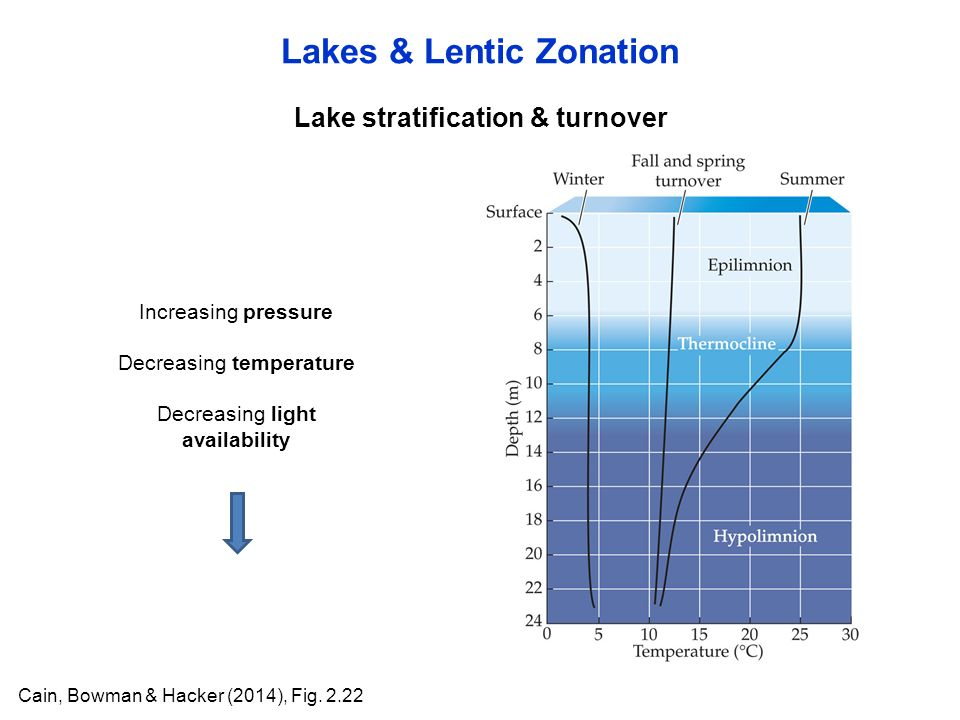 Lake stratification & turnover Lakes & Lentic Zonation Cain, Bowman & Hacker (2014), Fig.