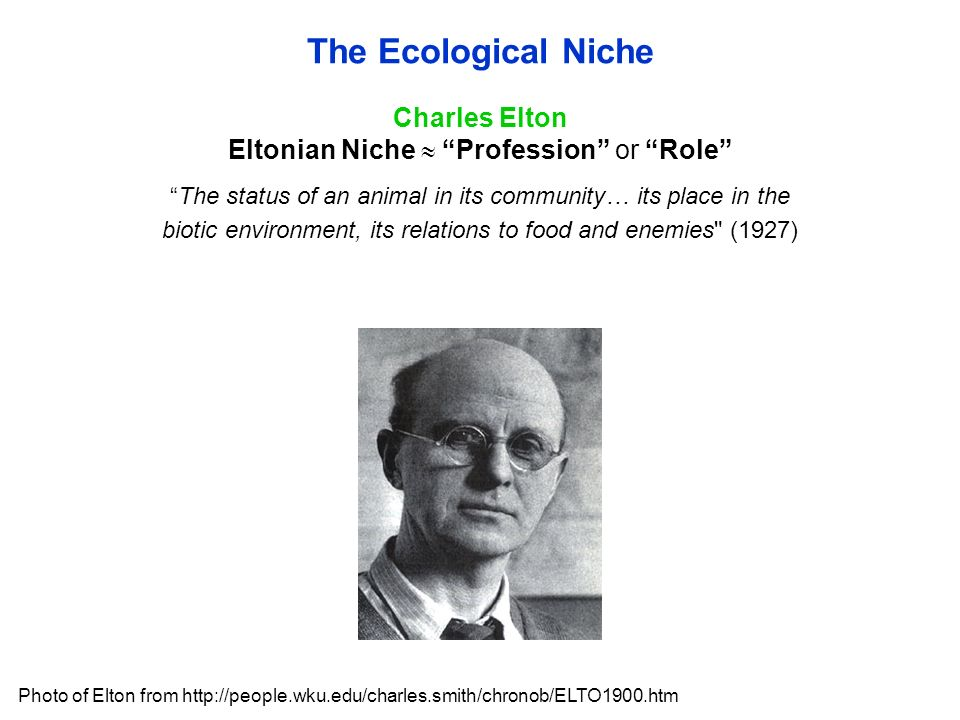 Charles Elton Eltonian Niche  Profession or Role The status of an animal in its community… its place in the biotic environment, its relations to food and enemies (1927) The Ecological Niche Photo of Elton from