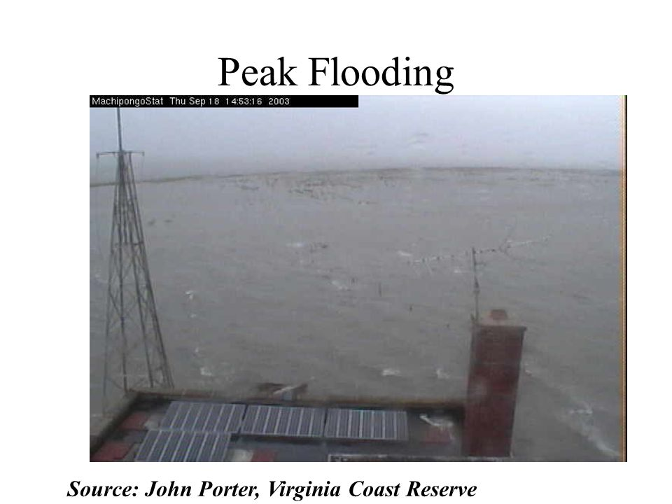Peak Flooding Source: John Porter, Virginia Coast Reserve