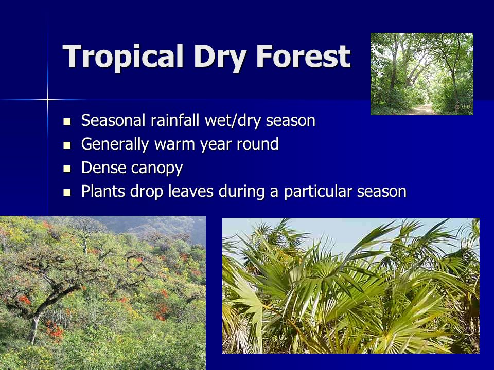 tropical forest climate