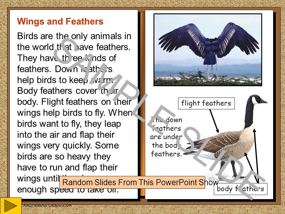Slide Show Of Some Of My Bird Photos >> All About Birds An Information Booklet For My Friends Dusty