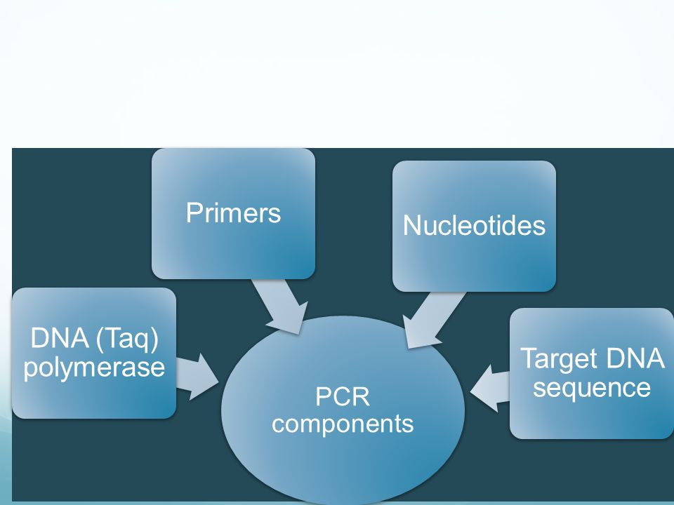 PCR components DNA (Taq) polymerase PrimersNucleotides Target DNA sequence