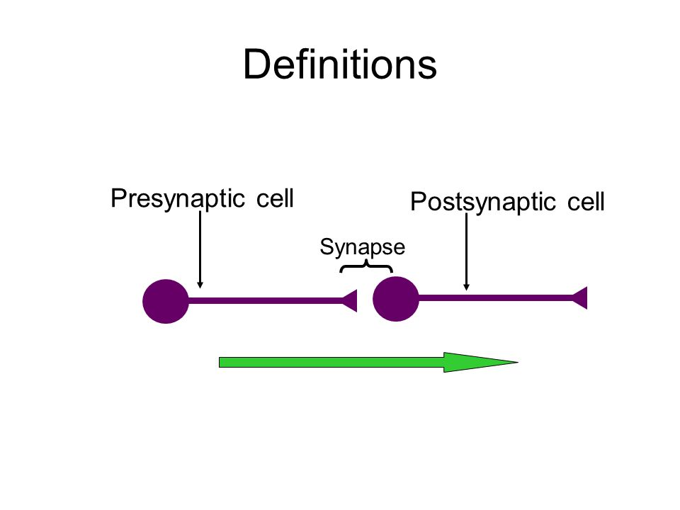 Definitions Presynaptic cell Postsynaptic cell Synapse