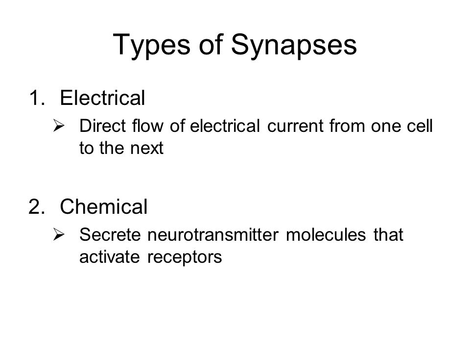 Types of Synapses 1.Electrical  Direct flow of electrical current from one cell to the next 2.Chemical  Secrete neurotransmitter molecules that activate receptors