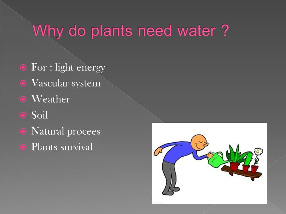 Why Do People Need Plants 3 For Light Energy Vascular System Weather Soil Natural Procees Survival