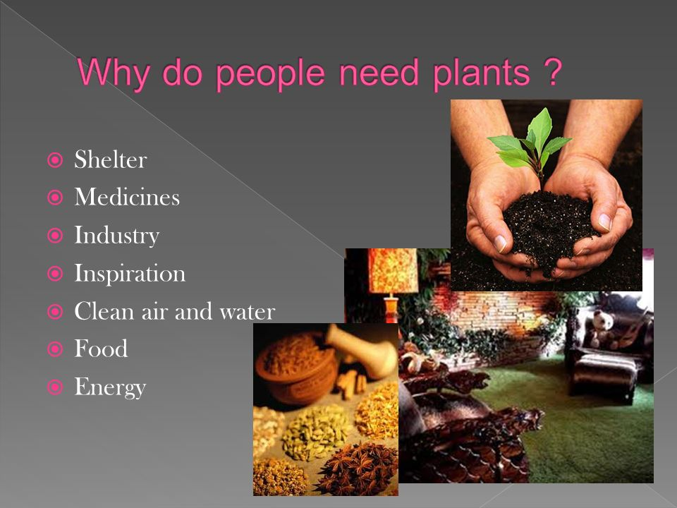 4 Shelter Medicines Industry Inspiration Clean Air And Water Food Energy