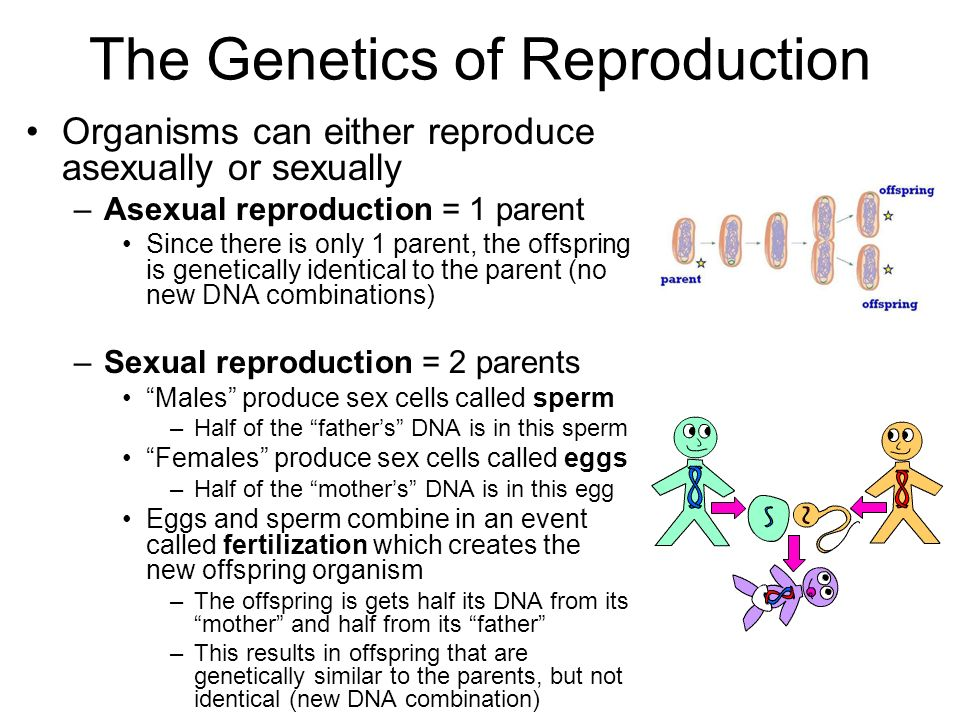 Asexual reproduction define biology purebred