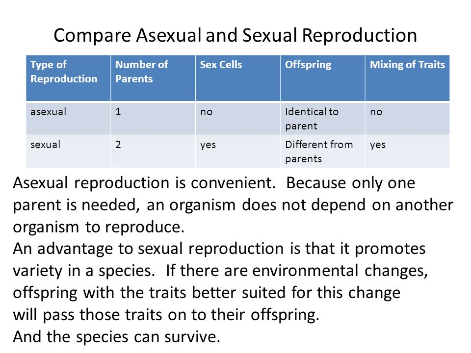 Difference between offspring asexual reproduction in fungi