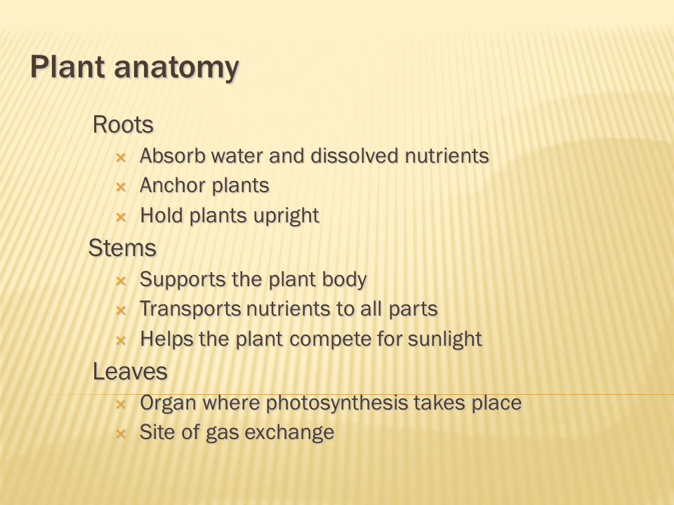 Plant anatomy Roots  Absorb water and dissolved nutrients  Anchor plants  Hold plants upright Stems  Supports the plant body  Transports nutrients to all parts  Helps the plant compete for sunlight Leaves  Organ where photosynthesis takes place  Site of gas exchange