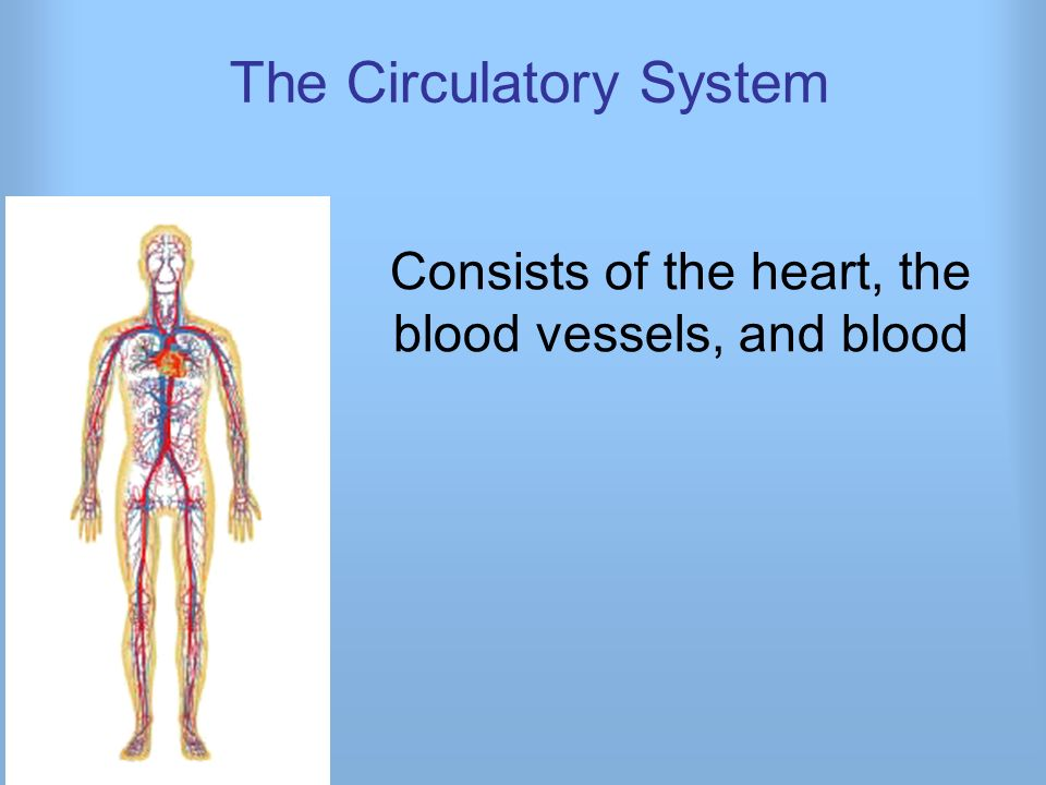 The Circulatory System Consists of the heart, the blood vessels, and ...