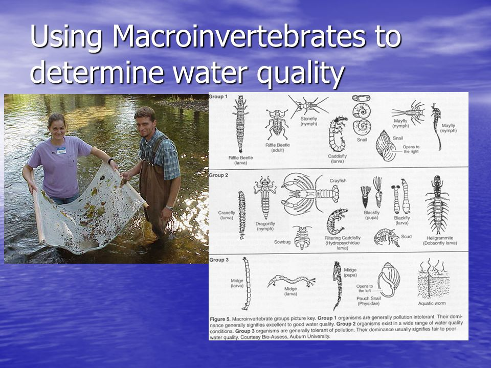 Using Macroinvertebrates to determine water quality