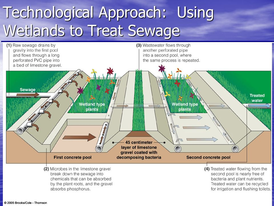 Technological Approach: Using Wetlands to Treat Sewage Fig p. 513