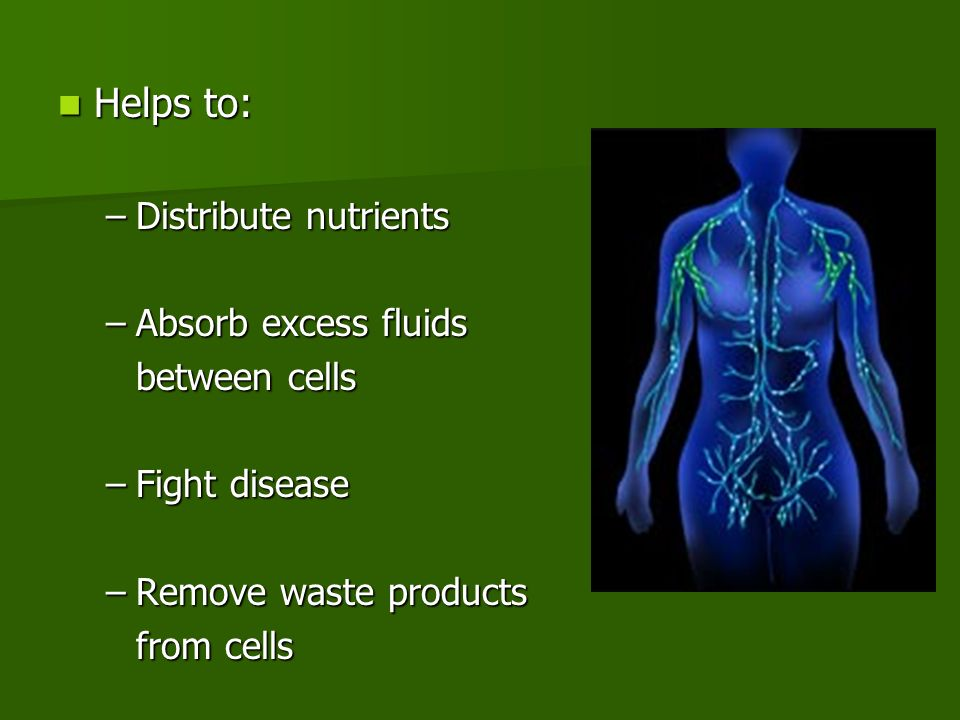 Helps to: Helps to: –Distribute nutrients –Absorb excess fluids between cells –Fight disease –Remove waste products from cells