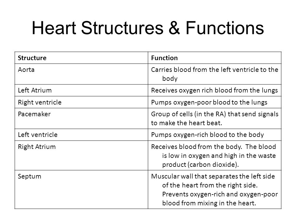 Shopping Powerpoint The Cardiovascular System 7 Th Grade Science