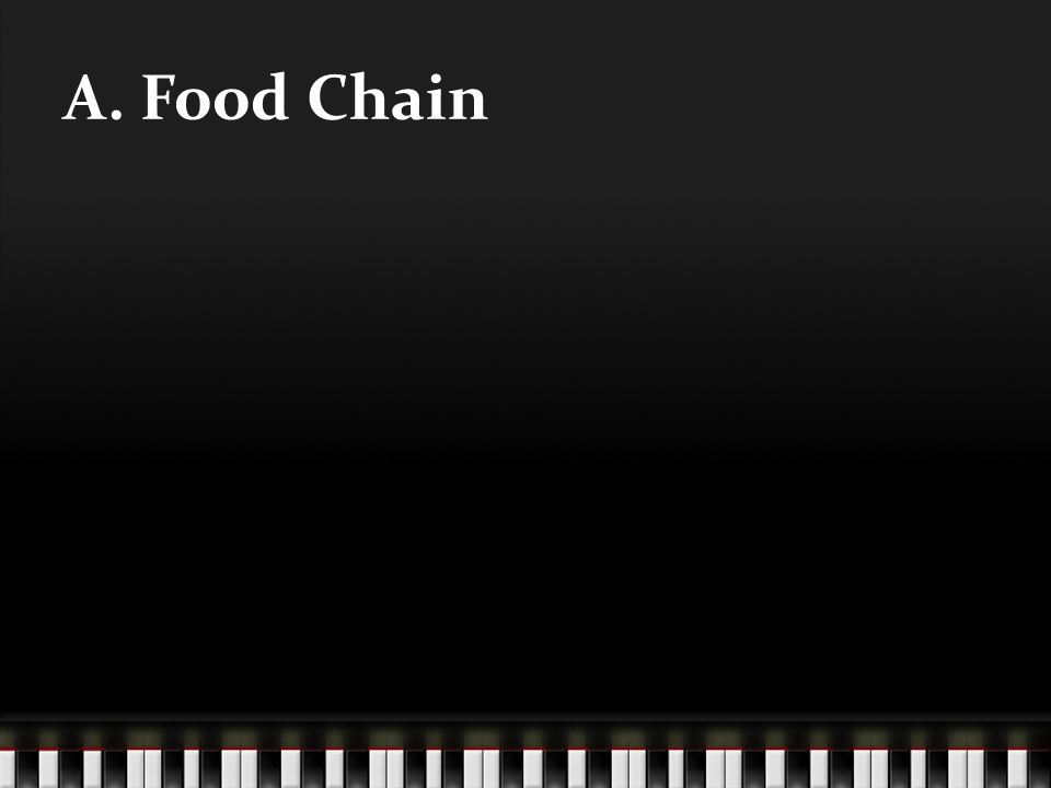 A. Food Chain
