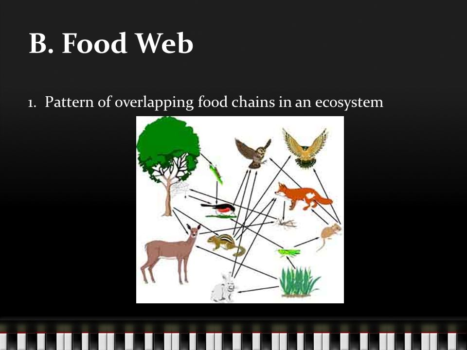 B. Food Web 1. Pattern of overlapping food chains in an ecosystem