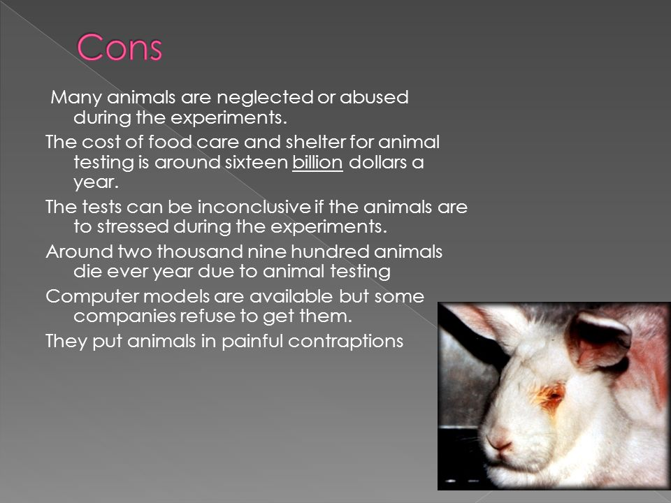 a look at animal testing as abuse of the innocent Animal abuse often brings a beaten companion animal to mind, but the term has a much broader usage it can be used in reference to the animals who are tested on, slaughtered, skinned, exploited in the entertainment industry, or neglected.
