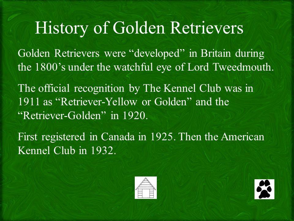 Golden Retrievers By Tammy Bird Navigation Backhomenext Standards