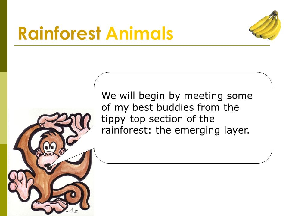 Guide to the Rainforest Mr  Valle ' s Guide to the