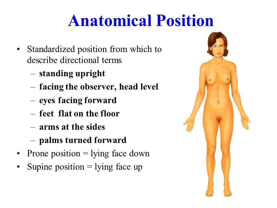 Supine Definition Anatomy Gallery Human Anatomy Diagram Organs