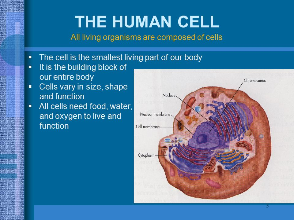 1 Anatomy Physiology Understanding The Human Body Ppt Download